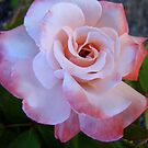 a touch of pink by Jan Stead JEMproductions