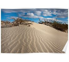 Mesquite Sand Dunes Poster