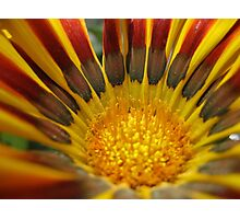 Bright Like the Sun Photographic Print