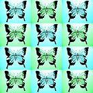 Sea Butterflies by cathyjacobs