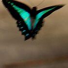 blue butterfly by elladoor