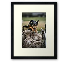 Counting Sheep Framed Print