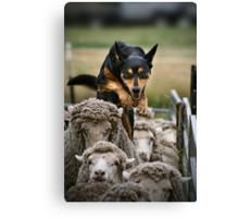 Counting Sheep Canvas Print
