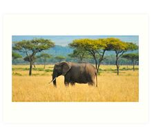 The Lonely Elephant Art Print