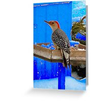 Bird at the feeder  Greeting Card