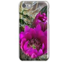 Pink Hedgehog Cactus  iPhone Case/Skin