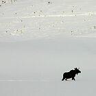 Lone Moose by Patricia Montgomery