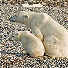 Polar Bear mother and cub 1 by Wolfwalker