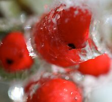 Winter Frozen Berries by Nadine Rippelmeyer