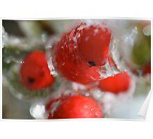Winter Frozen Berries Poster