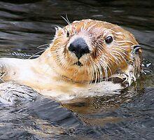Sea Otter by Sheena Hartley