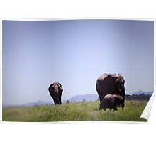 Approaching Elephants Poster