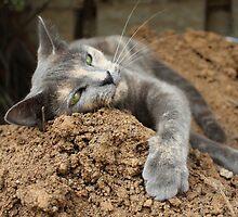 cat in dirt by jenterpixels