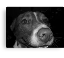 Playful Dog Canvas Print