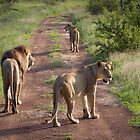 Lion Family in Hlane by Tobin Rogers