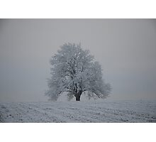 Winter in Norway Photographic Print