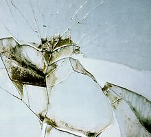 Broken Glass At the Gardens by Abby Rheaume