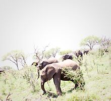 Elephants Grazing at Mkhaya Reserve by Tobin Rogers