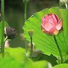 Lotus in the Bird Sanctuary by gustinegirl