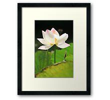 White Lotus in a Pond Framed Print