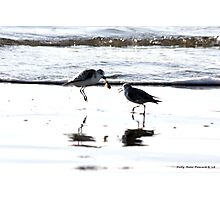 It's My Crab and YOU Can't Have It!! Photographic Print