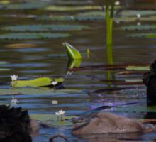 A Trip To The Big Pond Sticker