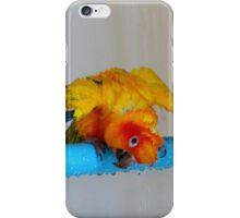 Sunshine Shower Time - Sun Conure - NZ iPhone Case/Skin