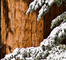 Fresh Snow by Keri Oberly