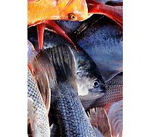 Fish Mayhem Photographic Print