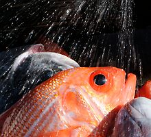 Fishy shower by Liv Stockley