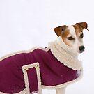 A New Winter Coat..... by Larry Llewellyn