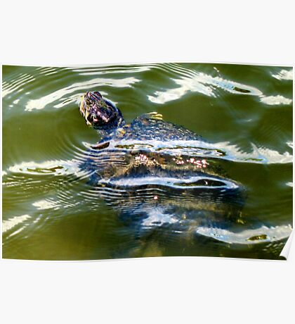 Snapping turtle closeup Poster