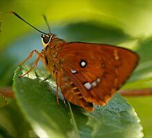 Even Bugs Get Hot by Josie Eldred