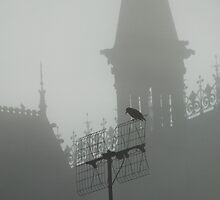 starling in the fog (1) by lukasdf
