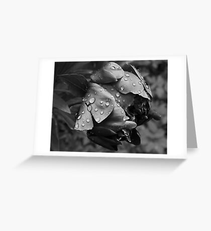 Vintage black and white Peony Greeting Card