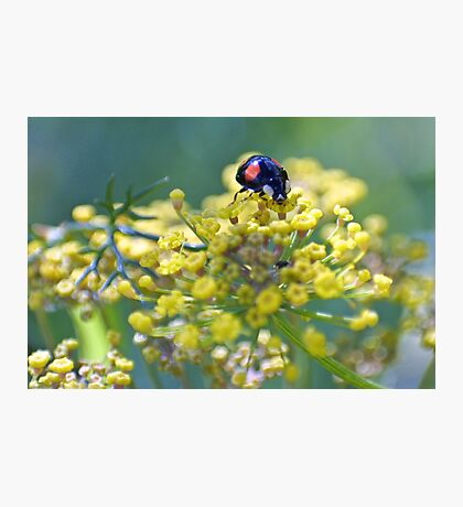 Sourcing the sweetest fennel Photographic Print