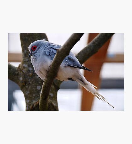 Diamond Dove Photographic Print