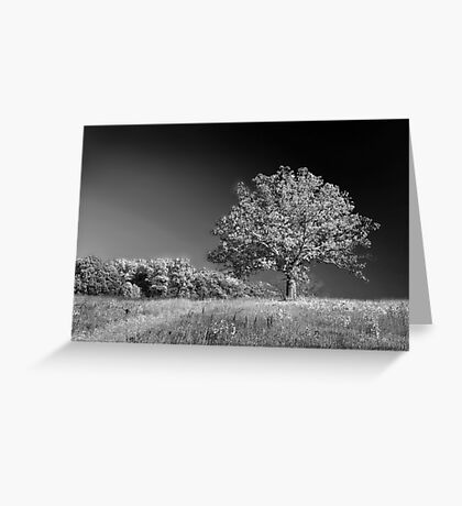 A grand old tree Greeting Card