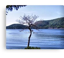 A Tree Grows in Acadia Canvas Print