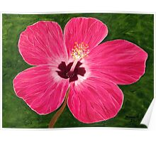 Pink Hibiscus  Poster