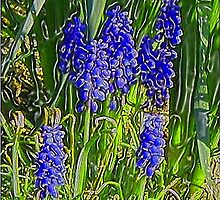 Grape Hyacinths by Holly Martinson