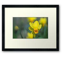 Narcis Framed Print