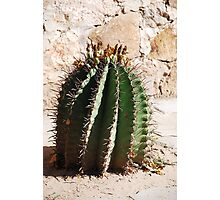 natural spines Photographic Print