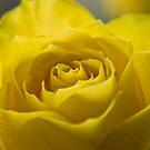 Its a Yellow day by Nala