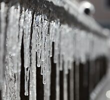 Icicles at Attention by Nadine Rippelmeyer