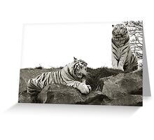 Tigers Lunch Greeting Card