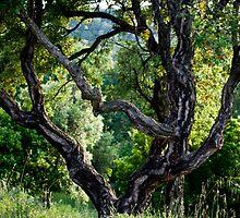 cork Oak by GOSIA GRZYBEK