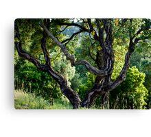 cork Oak Canvas Print