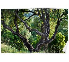 cork Oak Poster