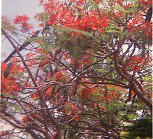royal flame tree by jiorji
